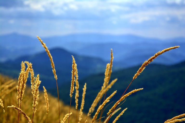 Bieszczady - widok na góry